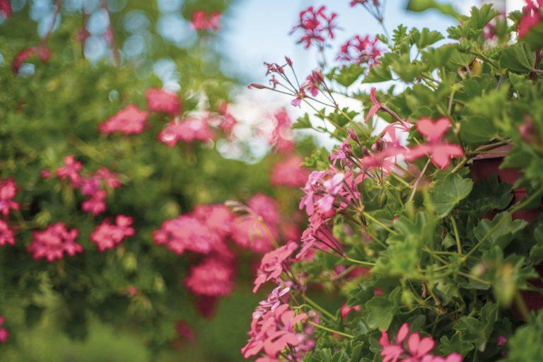 Poliklinika-Gusic-cvijece-vrt